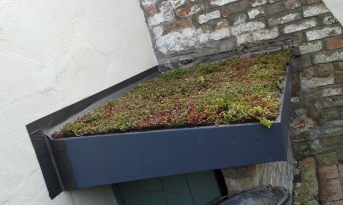 Sedum roof made with wood originally from Cabot Circus